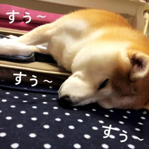 お家ですやすや〜(o^^o)