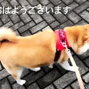 雨じゃない朝だ(o^^o)