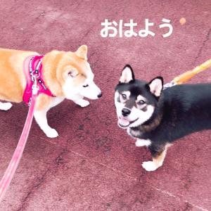 楽しい朝ん歩だったの〜(ᵔᴥᵔ)