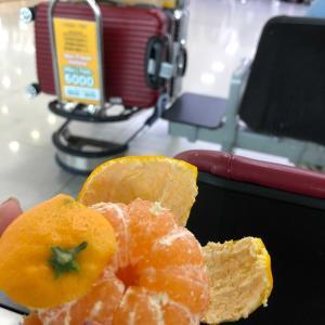 済州空港で我慢できずにパクリ