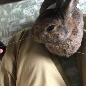 糸切りウサギ
