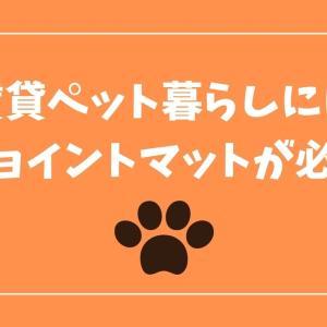 防音ジョイントマットで、犬猫運動会のストレス(飼い主)が激減した話