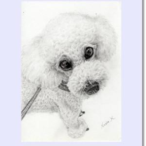 トイプードル 鉛筆画 デッサン 肖像画 似顔絵