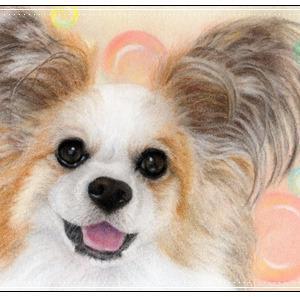 パピヨン パステルで描くペット肖像画・ペット似顔絵