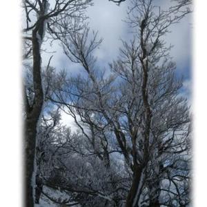 霧氷を求めて・・・(#^.^#)➁