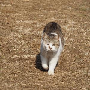 失踪する猫 第12章 - 6