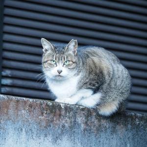 失踪する猫 第6章 - 16