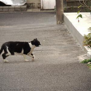 失踪する猫 第9章 - 6