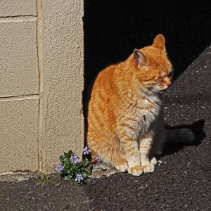 失踪する猫 第7章 - 2