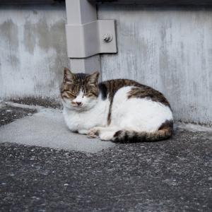 失踪する猫 第7章 - 6