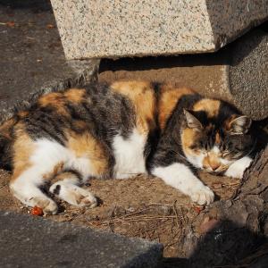失踪する猫 第12章 - 8