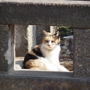 失踪する猫 第6章 - 18