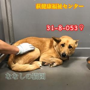 萩健康福祉センター 中型犬収容