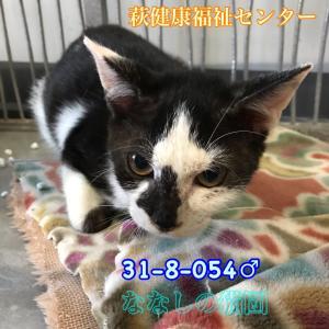萩健康福祉センター 子猫収容