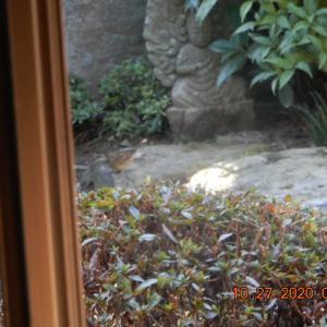 我家の庭にやって来る野鳥