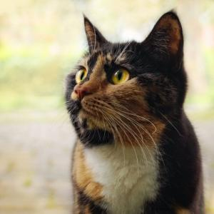 Eiken Mail Magazine 168 cats