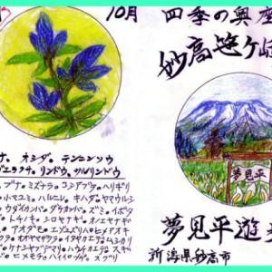 Updates: Walking Yumemi-Daira near Sasagamine Farm