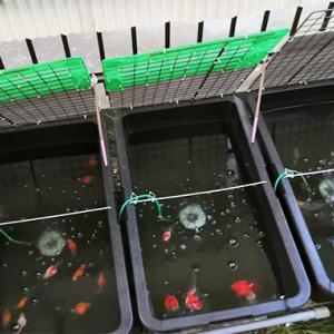 不安定な飼育水の原因
