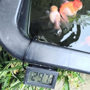 屋外舟は水温30℃