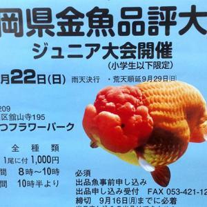 今年の静岡県金魚品評会