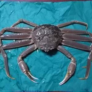 水蟹を調理(生から)
