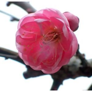 春はすぐそこまで来ていますが。