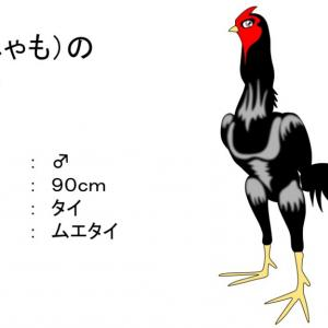 軍鶏ってカッコいい!!