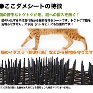 家の敷地内で猫にフンされないための対策は?