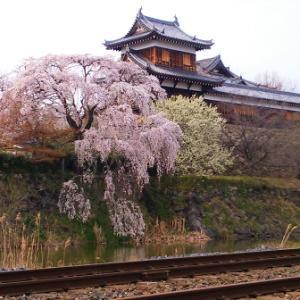 今年の桜・桜・桜…