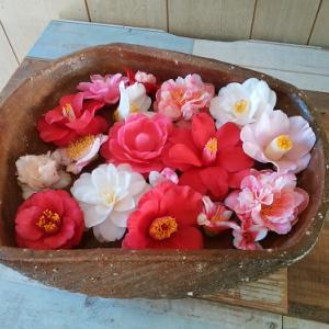 桜の開花が進む中、椿三昧のこんな場所へ