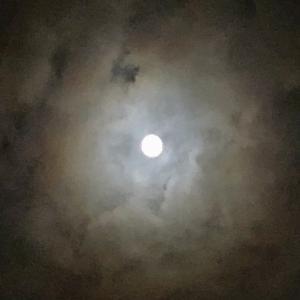 12日は、満月♡  エビは?   抱卵の舞は???