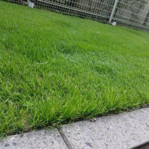 芝の手入れ記録