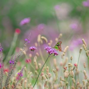 「王国の蝶」とアニマルコミュニケーション(2回目のロックダウン 4日目)