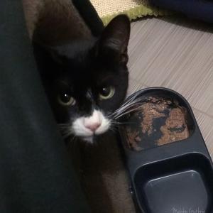 保護猫J.D.君の様子(2回目のロックダウン 21日目)