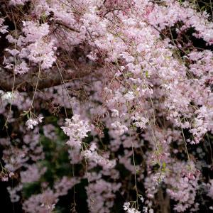 春色の町(2回目のロックダウン 69日目)
