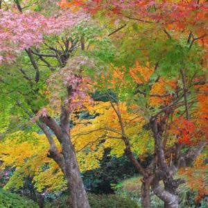 吉水園の紅葉