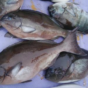 6月4日夕釣りの釣果