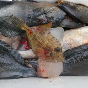 6月14日昼釣りの釣果