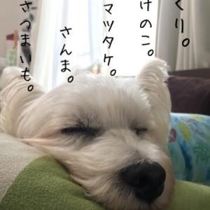 よく寝る子は育つんだって。