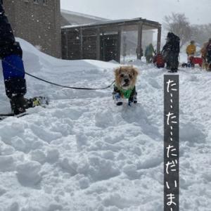 ③ 吹雪の中のスノードッグトレール【奇跡がっ編】