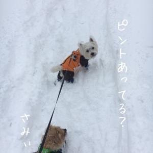 完④吹雪の中のスノードッグトレール【編】