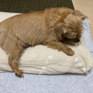 布団というか、ワンコと一緒に寝るとは。