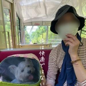 【犬と登山】筑波山 その②