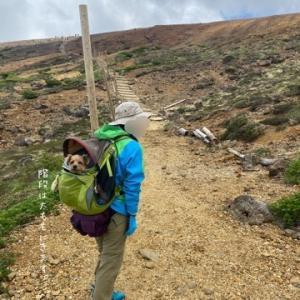 完【犬と登山】ワンコと蔵王の熊野岳・地蔵山・刈田岳へ登山!(後編)