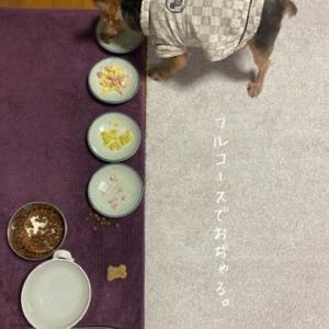 1日3食、食べる犬。