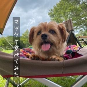 ②【犬とキャンプ】ディキャンで肉を焼こう!(後編)