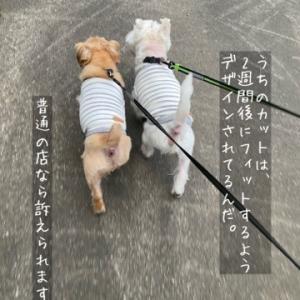 可哀想だから、散歩にいく。