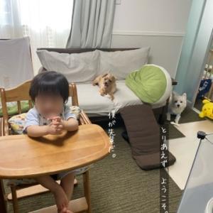 ワンコと赤ちゃん