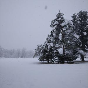 デイサービスカトレア2020年04月09日 雪だべさ!