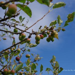 姫リンゴと空